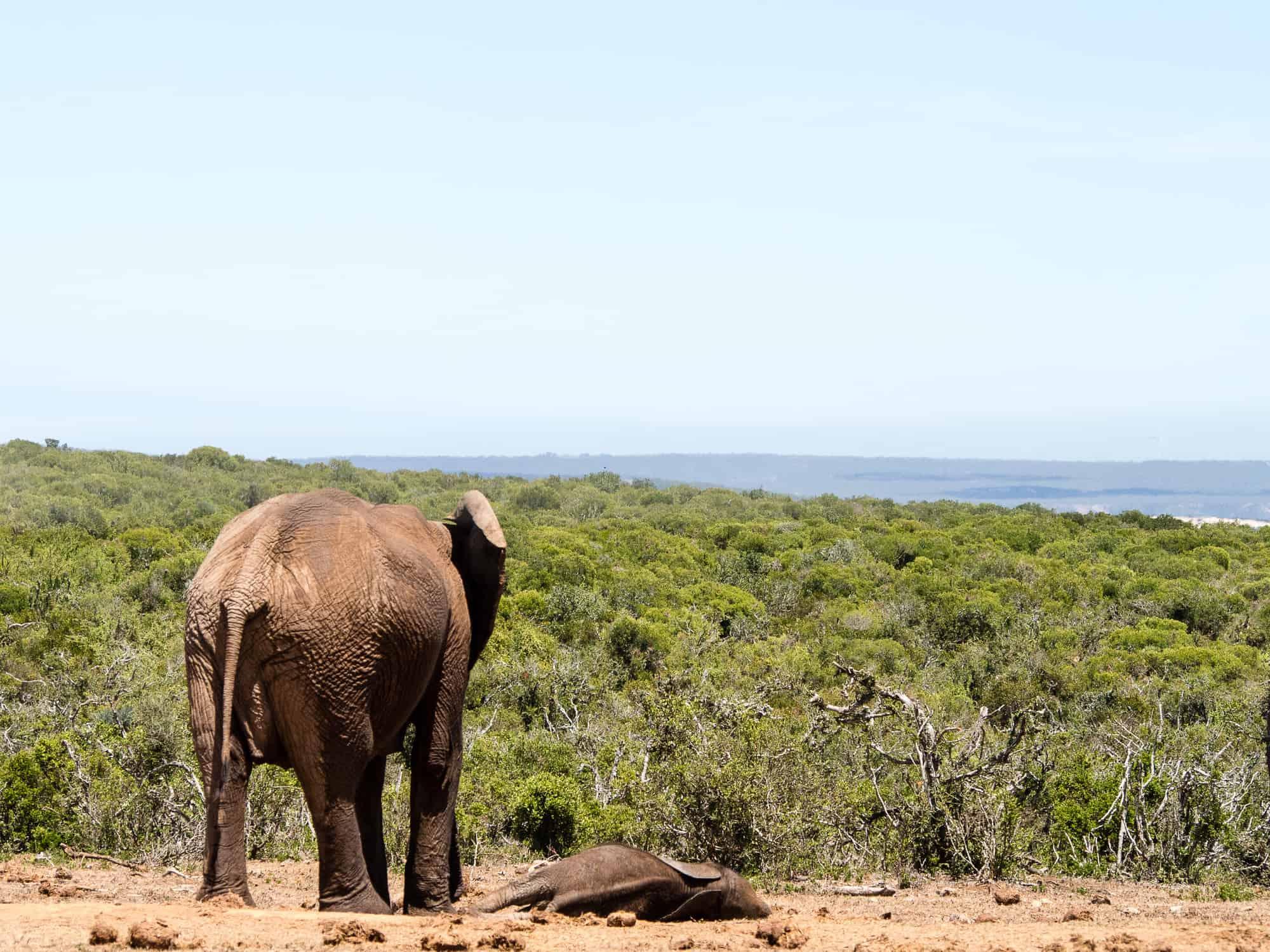 Elefant mit Baby im Addo Elephant Park