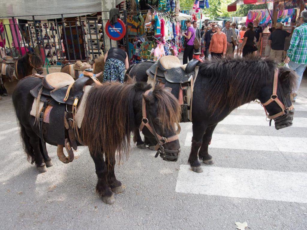 Bauernmarkt in Sineu auf Mallorca
