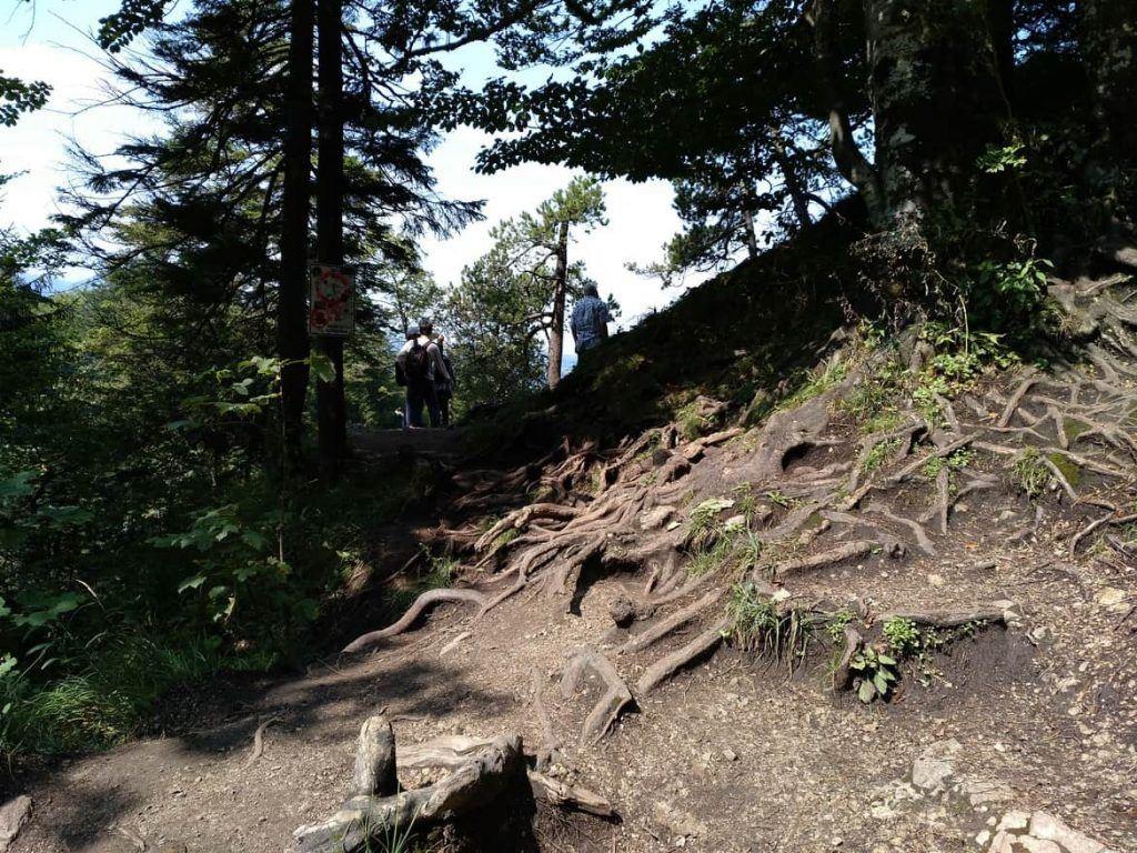 Weg durch den Wald zum Aussichtspunkt auf Schloss Neuschwanstein