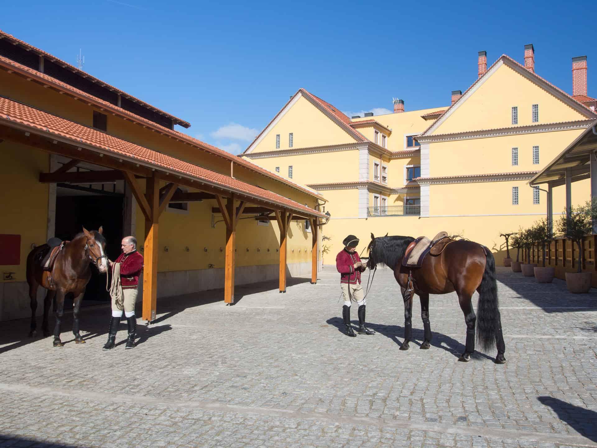 Lusitano Hengste an der Hofreitschule in Belem Lissabon Portugal
