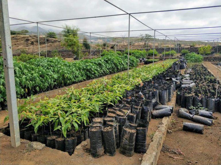 Pflanzenzucht auf Fogo Kapverden