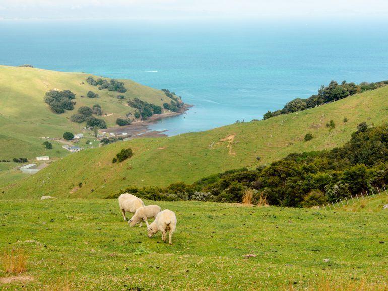 Aussicht Coromandel Peninsula Neuseeland